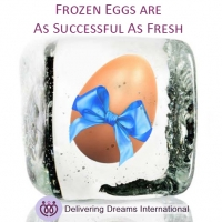 Successful Births: Are Fresh Eggs More Successful Than Frozen? NO