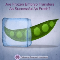 Are Fresh Embryos More Successful Than Frozen?