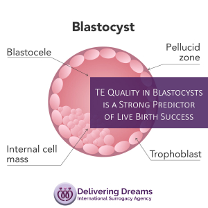 Ukrainian Surrogacy: TE Quality in Blastocysts is a Strong Predictor of Live Birth Success